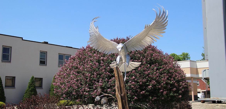 Photo: Wild Wings