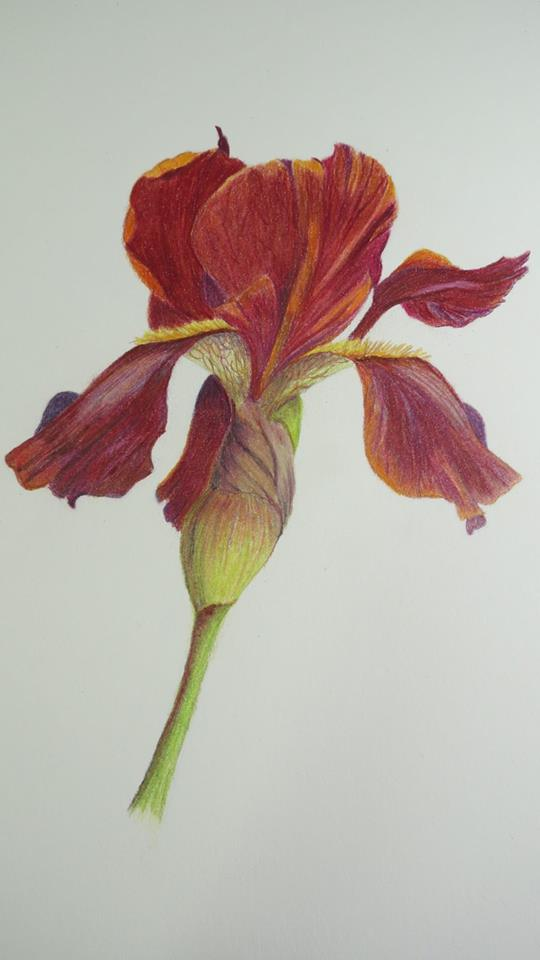 Botanicals Art Exhibit: Gerry Tostenson